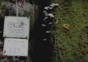 label_mushroom