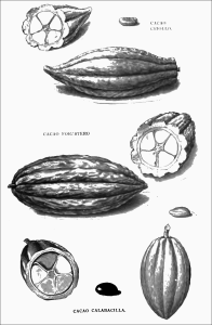 varieties_of_cocoa