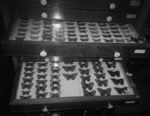 butterfly_case